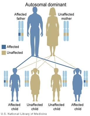 Main Inheritance Patterns Genes In Life Mesmerizing Patterns Of Inheritance