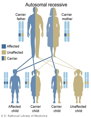 Main Inheritance Patterns Genes In Life Amazing Patterns Of Inheritance