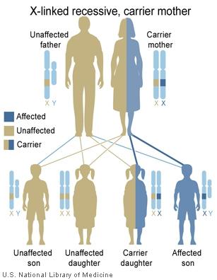 Main Inheritance Patterns Genes In Life